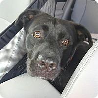 Adopt A Pet :: Diego - Lebanon, ME