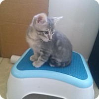Adopt A Pet :: A378910 Yuppidoo - San Antonio, TX