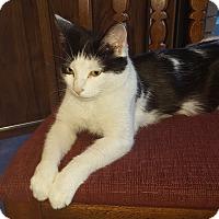 Adopt A Pet :: Rizzoli - Toronto, ON