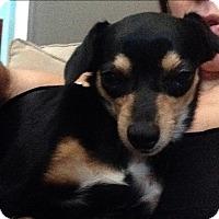 Adopt A Pet :: Cammie - San Marcos, CA