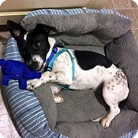 Adopt A Pet :: Kip - Huntsville, AL