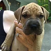 Adopt A Pet :: Sunny - Clarkston, MI