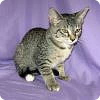 Adopt A Pet :: Lilith - Powell, OH