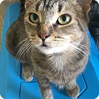 Adopt A Pet :: Geraniam - Toledo, OH