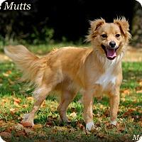 Adopt A Pet :: Matilda Jane - Dixon, KY