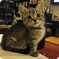 Adopt A Pet :: Yesenia - Gaithersburg, MD
