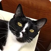 Adopt A Pet :: Marla - Fairfax, VA