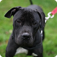 Adopt A Pet :: Oona - Long Beach, NY