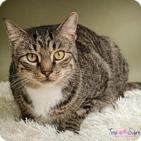 Adopt A Pet :: Fritz - Big Canoe, GA