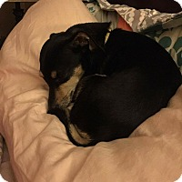 Adopt A Pet :: Max Jr (MJ) - Albemarle, NC