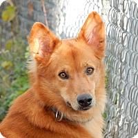 Adopt A Pet :: Brandy - Long Beach, NY