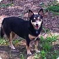Adopt A Pet :: Fifi-sweetest girl in world - Pewaukee, WI