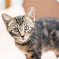 Adopt A Pet :: Jenson - Fountain Hills, AZ