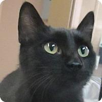 Adopt A Pet :: Penelope - Lloydminster, AB