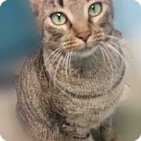 Adopt A Pet :: Lily - Ocala, FL