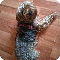 Adopt A Pet :: Sookie - North Port, FL