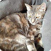 Adopt A Pet :: Bridget - East Hanover, NJ