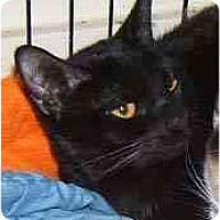 Adopt A Pet :: Shimmer - Dallas, TX
