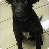 Adopt A Pet :: B Pups - Bodi - Salt Lake City, UT