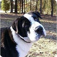Adopt A Pet :: Magoo - Mocksville, NC