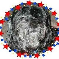 Adopt A Pet :: Whizzie - Mays Landing, NJ