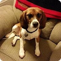 Adopt A Pet :: Austin - Yardley, PA