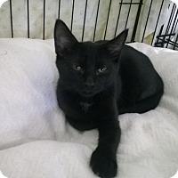Adopt A Pet :: Pip - Speonk, NY