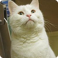 Adopt A Pet :: Lily - Gainesville, VA