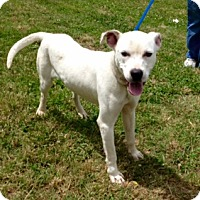 Adopt A Pet :: CHASE - Glastonbury, CT