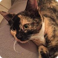 Adopt A Pet :: Lil Bit - BROOKSVILLE, FL