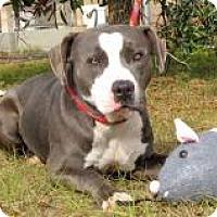 Adopt A Pet :: Matt - Darien, GA