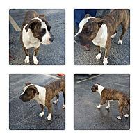 Adopt A Pet :: King Ralph - Ocean Ridge, FL