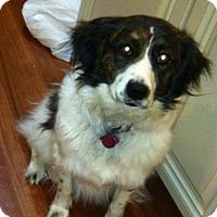 Adopt A Pet :: Lily - Oakland, AR