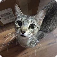 Adopt A Pet :: Mami - Houston, TX