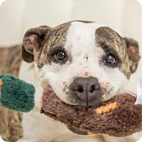 Adopt A Pet :: Mia - Mount Juliet, TN
