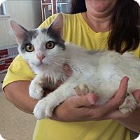 Adopt A Pet :: LeBron - Breese, IL