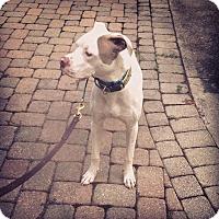 Adopt A Pet :: Cranberry - Loveland, OH