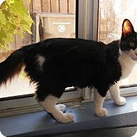Adopt A Pet :: Carmen - Riverside, CA