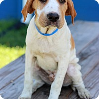 Adopt A Pet :: Potter - Waldorf, MD