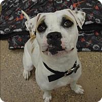 Adopt A Pet :: Mufasa - Madison, NJ