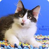 Adopt A Pet :: Mason - Sterling Heights, MI