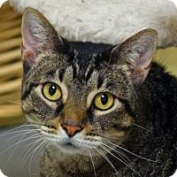 Adopt A Pet :: Merceline - Norwalk, CT