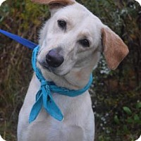 Adopt A Pet :: Harper - Chester Springs, PA