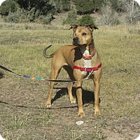 Adopt A Pet :: JoJo - Ridgway, CO