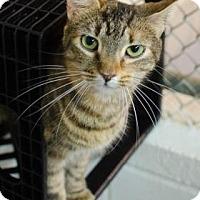 Adopt A Pet :: Nicole - Greenwood, SC