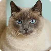 Adopt A Pet :: Sasha - Coronado, CA