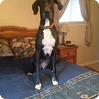 Adopt A Pet :: Jessie - Austin, TX