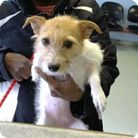 Adopt A Pet :: Cupcake FKA Jayla - Philadelphia, PA