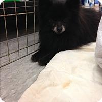 Adopt A Pet :: Cole - Inverness, FL