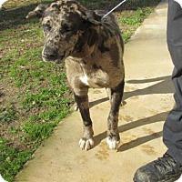 Adopt A Pet :: Aidan - Rocky Mount, NC